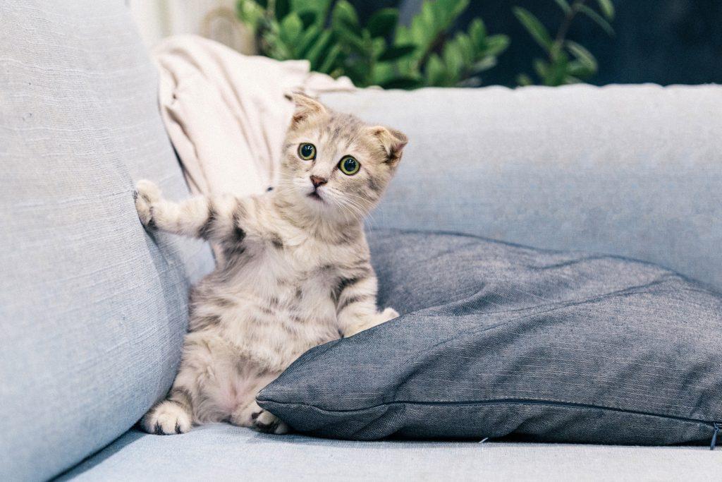Kätzchen auf dem Sofa
